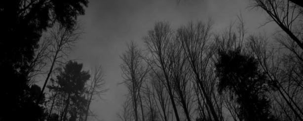 cropped-cropped-cropped-cropped-forest.jpg